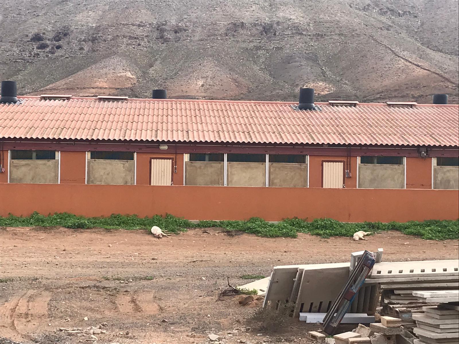 09e77a6b-224b-457b-a8a7-c8a20a0f0b8a-copia Acumula cochinos muertos en el exterior de una granja porcina en Fuerteventura